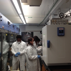 Attacking a Mite Problem in the Fly Lab_3